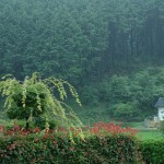 Forest garden in Shiso-shi, Hyogo Prefecture, Japan / cotaro70s Flickr Creative Commons