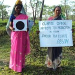 Climate change has resulted in an extreme dry spell that has ruined the tea crops in Assam / by 350.org
